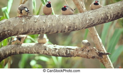 Small Cute birds, finchs birds on the tree branch. Slow...