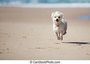 Small cute dog jumping on a sandy beach