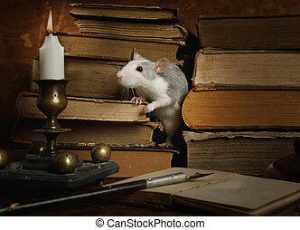 Small cute gray rat crawls between old books on the table