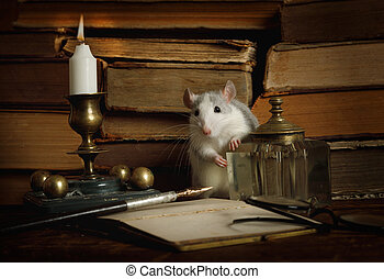Small cute gray rat runs around among between old books on the table