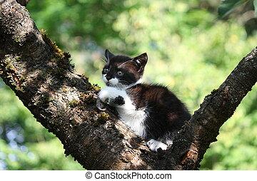 Small cute kitten climbing the tree in the garden