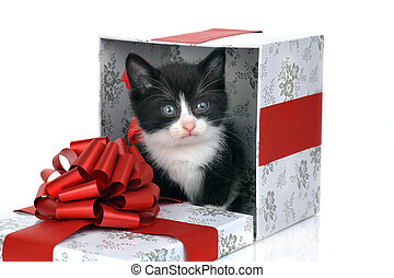 small cute kitten inside gift box