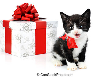 small cute kitten near gift box