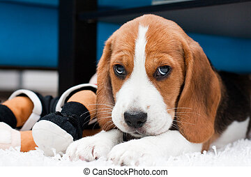 Small cute puppy with toys
