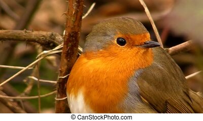 Small cute tiny orange bird parrot sitting on green tree branch observing wild nature in beautiful close up view