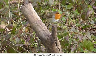 Small cute tiny orange bird parrot sitting on green tree branch observing wild nature in fascinating close up view