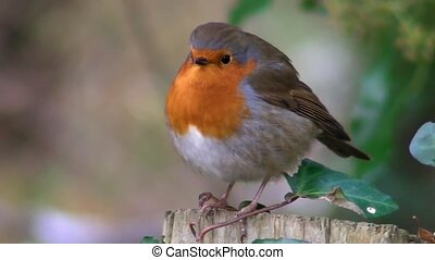 Small cute tiny orange bird parrot sitting on green tree branch observing wild nature in glorious close up view