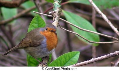 Small cute tiny orange bird parrot sitting on green tree branch observing wild nature in gorgeous close up view