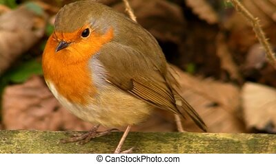 Small cute tiny orange bird parrot sitting on green tree branch observing wild nature in magnificent close up view