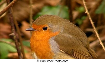 Small cute tiny orange bird parrot sitting on green tree branch observing wild nature in picturesque close up view