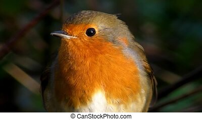 Small cute tiny orange bird parrot sitting on green tree branch observing wild nature in spectacular close up view