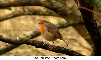 Small cute tiny orange bird parrot sitting on green tree branch observing wild nature in wonderful close up view