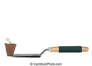 daisy seedling on gardening shovel