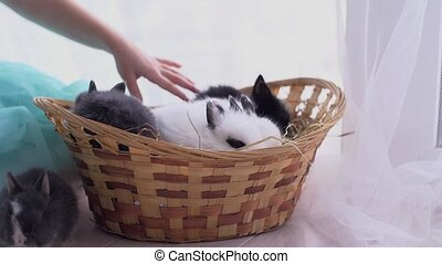 Small decorative white rabbit sitting into the basket. The...