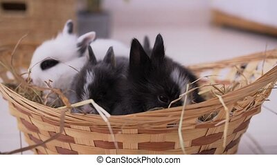 Small decorative white rabbit sitting into the basket. The Easter celebration