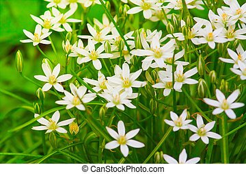 small delicate white summer flowers