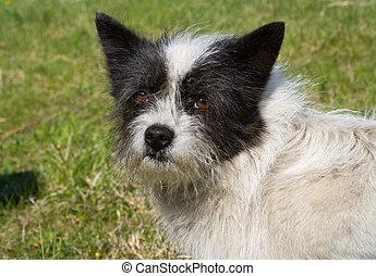 Small Dog 3