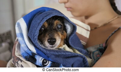 Small Dog After Bathing