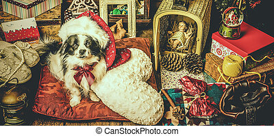 Small dog Christmas card - Portrait of little black and...