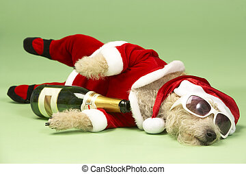 Small Dog In Santa Costume Lying Down With Champagne and...
