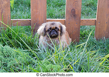 small dog in the grass