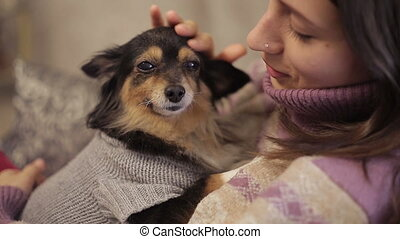Small dog loves mistress - Small dog on a hands of mistress