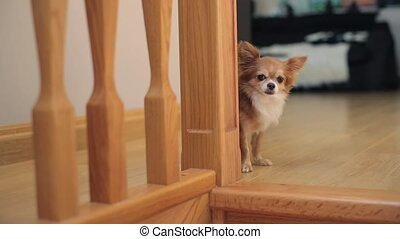 Small dog near stairs indoors