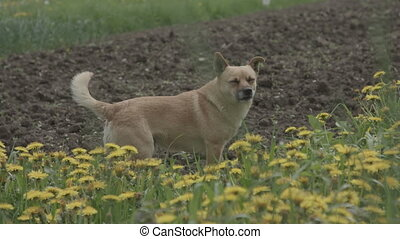 small dog on the grass with yellow flowers
