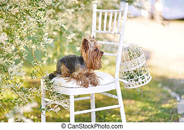 small dog portrait on nature in summer