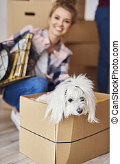 Small dog sitting in moving box