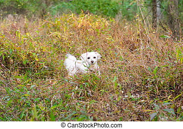 Small dog standing in tall grass
