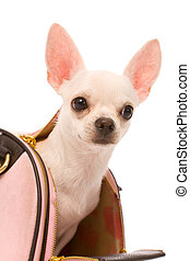 doggy - small doggy in bag on a white background