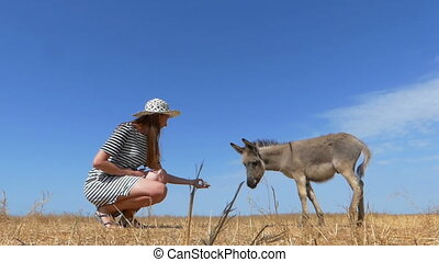 Small donkey is fed by a young woman in summer in slo-mo