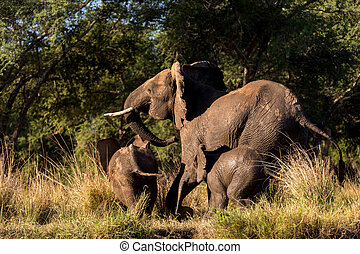 Elephant Family Running - Small Elephant Family Running in...