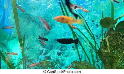 small exotic fishes in Aquarium close up