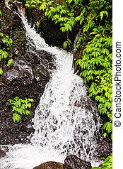 Small falls in the wild nature in tropics in the rain