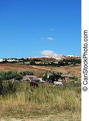 Small farm, Andalusia, Spain.