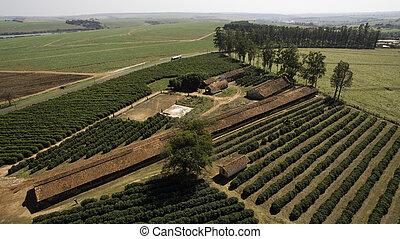 Small farm chickens and coffee in the interior of Brazil
