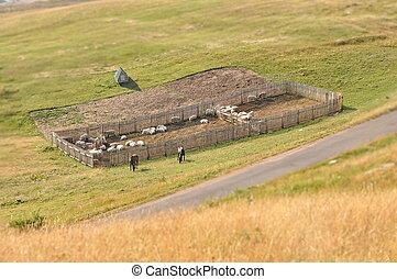 Small farm on a meadow