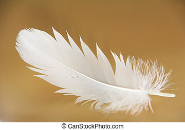 feather close-up