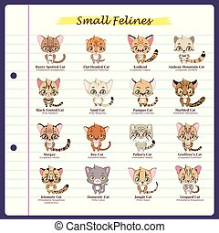 Small feline illustrations with regular and scientific names