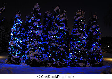 Small fir-trees covered with snow and decorated with lights