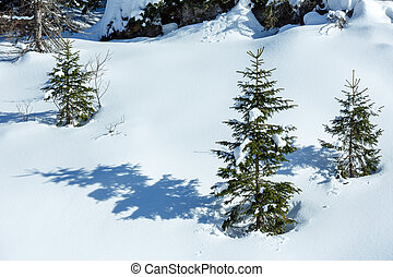 Small fir trees on winter mountain hill.