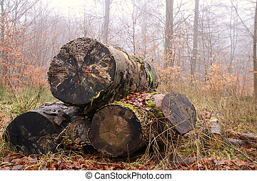 Small firewood stack with large tribes
