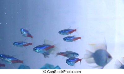 Small fish in aquarium