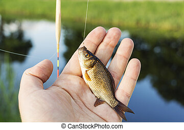 small fish in the hands of a fisherman on the background of the river.