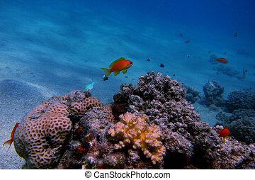 small fish in the sea