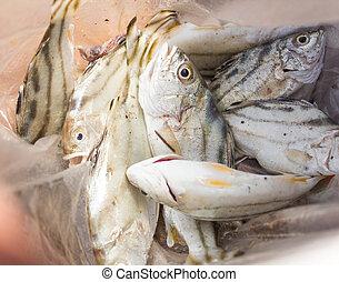 Small fish o