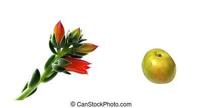 Small florets and green apple.