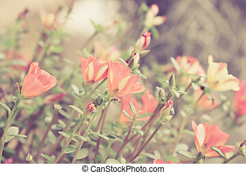 Small flower garden in beautiful bright colors ,vintage background